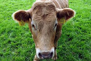 Livestock Feed, Supplies & Hay