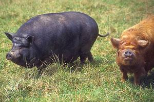 Livestock wildlife