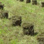 Square blales in the field