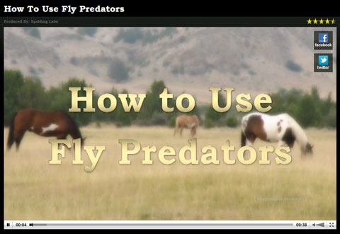 Watch this video about how fly predators work to reduce flies.