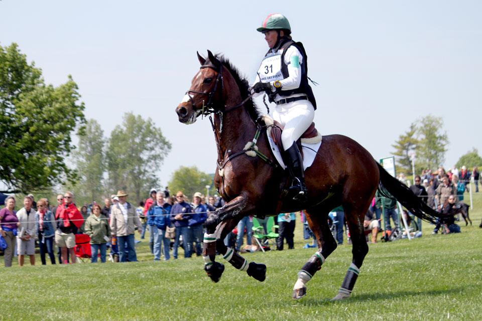 Horses is Training need Triple Crown Training Formula!