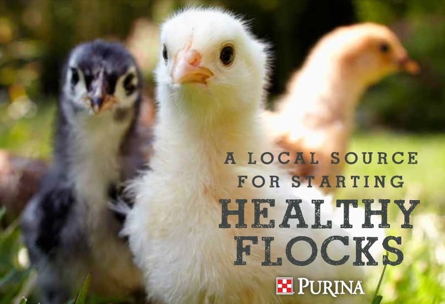 Purina Chick Days - March 10