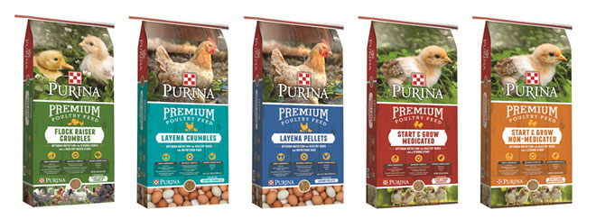 Purina Premium Poultry Feed available at North Fulton Feed & Seed, Alpaharetta, GA