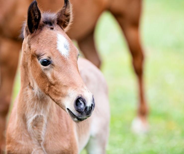Feeding Your Foal