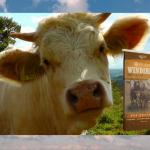 Cattle Mineral Tips for Fall